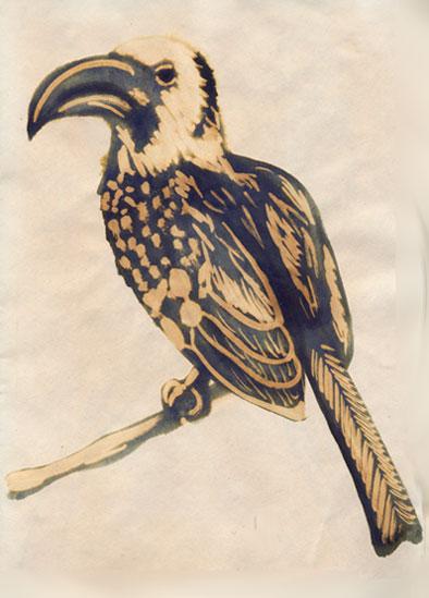 Hornbillrw